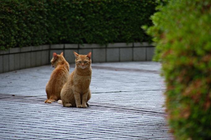 二匹の茶猫