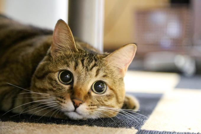 目を丸くして見つめる猫